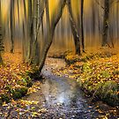 Autmn Woodland Stream by Ian Hufton