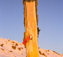 Lichened ski post, Ben Lomond, Tasmania by Alister A Mackinnon