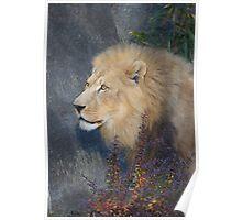 Lion Portrait-Woodland Park Zoo Poster