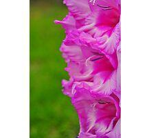Pink & Green Photographic Print