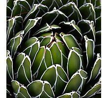 Green Heart Photographic Print