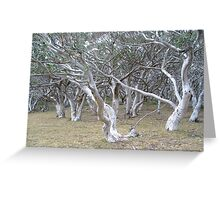 Mountain Ash Jungle Greeting Card