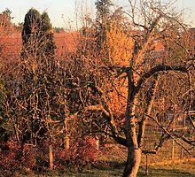 Good Morning Autumn by jakenight