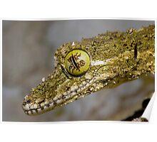 Leaf-tailed Gecko, Australia Poster