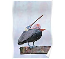 Pelican Stretching Its Pouch Inside Out Poster