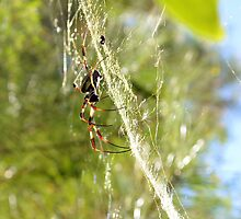 Web Cleaning by ©Dawne M. Dunton