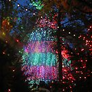 Tree and the Christmas Lights by PicsbyJody