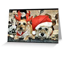 Cairn Christmas Greeting Card