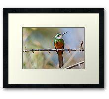 Rufous-tailed Jacamar, Brazil Framed Print