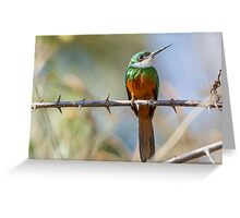 Rufous-tailed Jacamar, Brazil Greeting Card