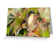 Black-capped Donacobius Greeting Card
