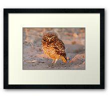 Burrowing Owl, Brazil Framed Print