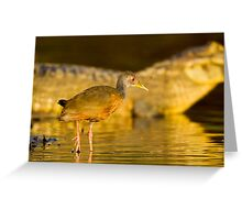 Grey-necked Wood Rail, Brazil Greeting Card