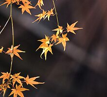 Sun rays and golden leaves by DerekEntwistle