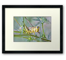 I'm A Lubber Not A Fighter Framed Print