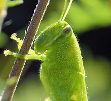 The Green Grasshopper by Dawne Dunton