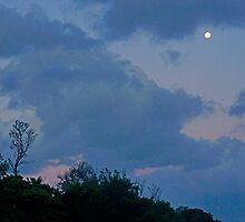 Indigo Sky by Harry Oldmeadow
