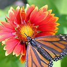 It's A Butterfly Life by Dawne Dunton