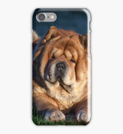 Chow-Chow portrait iPhone Case/Skin