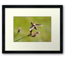 Bee Fly 2 Framed Print