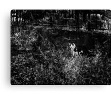We are being watched Canvas Print