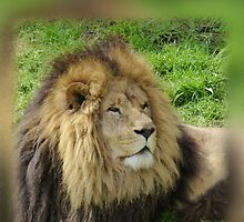 Male Black Lion by Keith Richardson