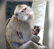 Monkey Mother and Child by Keith Richardson