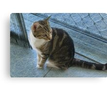 Gizmo - I am to be adored Canvas Print