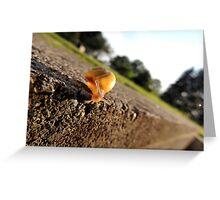 Oh Hai Mr. Snail Greeting Card