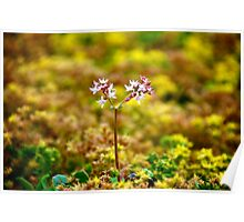 Tiny Alpine Flowers Poster