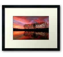 Fir Trees at Dusk Framed Print