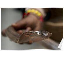 Cobra held by snake charmer Poster
