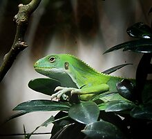 Yes, I Am Green, So What? by Alexandra Lavizzari