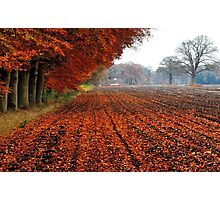A last treat of autumn Photographic Print