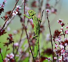 Green chameleon swinging on a branch by Nika Lerman