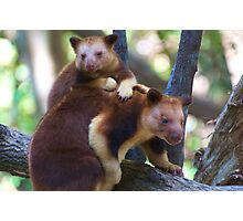 Mother & Child ~ Tree Kangaroos Photographic Print
