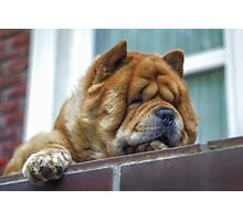 Chow watchdog Photographic Print