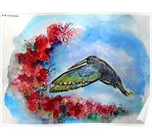 Hummingbird in Flight With Red Flowers Poster