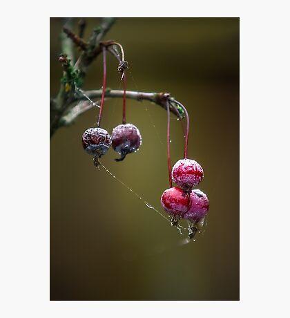 Red Balls Photographic Print