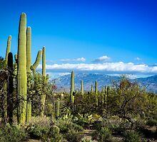 Desert Scape by Douglas Hamilton