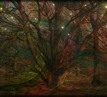 Night Forest by Kathie  Chicoine
