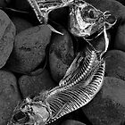 Fish Skeletons on Rocks by Randall Nyhof