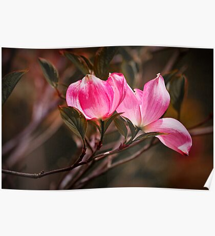 Pink Flower Tree Blossoms Poster
