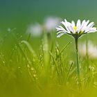 Just soak in the grass.... II by Bob Daalder