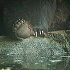 Bear Feet by Dana Horne