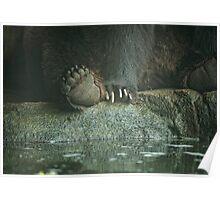 Bear Feet Poster