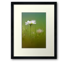 Just soak in the grass.... III Framed Print