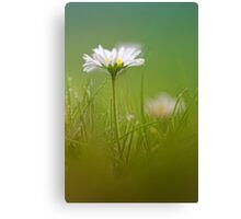 Just soak in the grass.... III Canvas Print