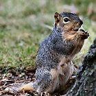 Please let Nuts be on Sale? by Keala