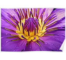 Waterlily Poster